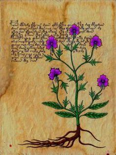 Voynich Dreams IV by DanteSangreal