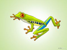 how to draw a red eyed tree frog - Google Search
