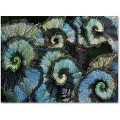 Trademark Fine Art Escargo Begonia Leaves Canvas Art by Kurt Shaffer, Size: 24 x 32, Multicolor