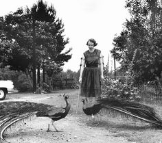 Flannery O'Connor and her peacocks, Milledgeville, GA