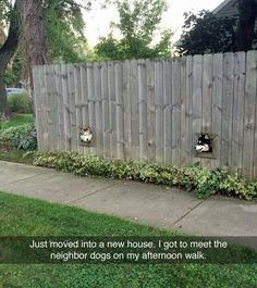 そして、なぜか世界中のイヌがこんなことになってきている。(w)  「新しい家に引っ越してきたから、近所のイヌたちに挨拶しなくちゃ」  http://imgur.com/vrmywgE