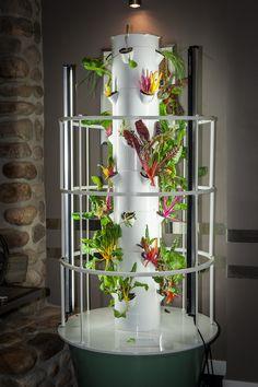 Fresh greens make for tasty treats #growityourself #fresh #organic #yyc http://bigrockgrill.com