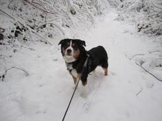 Zambo im Schnee