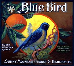 Blue Bird Brand Orange Crate Label, Sunny Mountain Orange Co. Posters Vintage, Vintage Labels, Vintage Ephemera, Vintage Postcards, Vintage Diy, Vintage Prints, Vintage Cards, Vintage Signs, Graphics Vintage