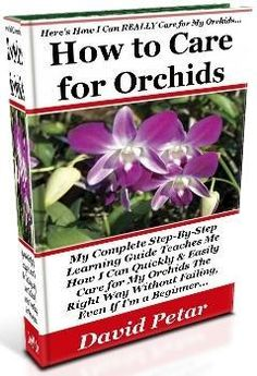 1000 Images About Orchids On Pinterest Orchid Care