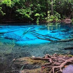 One of the most magical places in Thailand!!! 😍 Sra Morakot or the emerald pool...have you been?