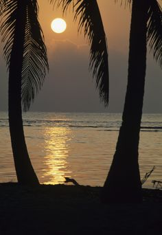 """Palm Trees and Caribbean Sunset """"If I had to choose a religion, the sun as the universal giver of life would be my god.""""  Napoleon Bonaparte"""
