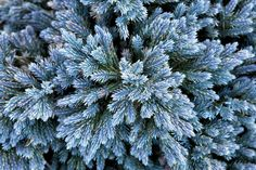 Use evergreen shrubs for vibrant flowers, leaves and stems all year long. Flip through this gallery from HGTV Gardens to find the best shrubs for your landscape. Best Shrubs For Shade, Types Of Shrubs, Shade Shrubs, Shrubs For Landscaping, Garden Shrubs, Shade Garden, Landscaping Ideas, Sarah's Garden, Garden Fences