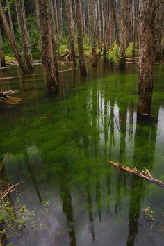 Swamp ~ unknown origin.  #swamps #nature #water