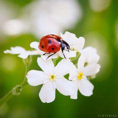 ladybird by Carole Merten