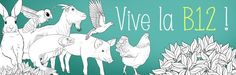 Groups, Vitamine B12, Rooster, Nutrition, Advice, Roosters, Chicken
