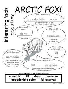 Arctic Fox Informational Text: Main Idea, Comprehension