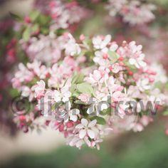 Naturbackdrop | Fotohintergrund | 150 cm x 150 cm - erhältlich im Lightdraw-Shop: http://www.lightdraw.de/produkt/fotohintergrund-150-cm-x-150-cm-vintagekirschblueten/ #backdrop #fotohintergrund