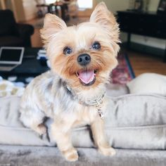 """In honor of @msgoldgirl's Bosley  crossing the  bridge today give your pet a squeeze and whisper in their ear """"iloveyouiloveyouiloveyou"""". Then go show @msgoldgirl some love on what is likely a very very hard day today.  #instagram #blogger #bblogger #beauty #fashion"""