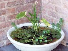 mini estanques en macetas -