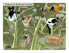 Learn about animals and habitats through simple, fun activities on Exploringnature.org Biomes, Madagascar, Ecology, Fun Activities, Habitats, Science Posters, Illustration, Classroom, Animals