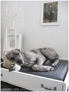 dog bed out of old drawer. This is adorable. Khia would love it and its cute enough to display!