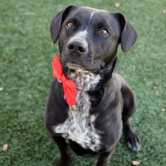 Tagalong - SPCA of Texas (McKinney) **Adopted December 2016**