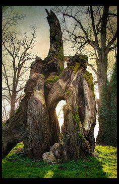 Mystic oak tree - can& you just imagine how magnificent that oak had been? Mystic oak tree - cant you just imagine how magnificent that oak had been? Mother Earth, Mother Nature, Bonsai, Unique Trees, Old Trees, Nature Tree, Flowers Nature, Tree Forest, Tree Art
