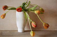 tulip by KathFirth. @go4fotos