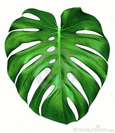 monstera leaf template