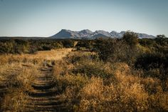 """Omaanda (inspired from the word """"Omhanda"""" meaning rhinoceros in Oshiwambo) owes its name to its exceptional location, in the heart of a private animal reserve, the Zannier Reserve by N/a'an ku sê. Lying on some 9,000 hectares in the savannah near the capital city of Windhoek, this vast, soberly luxurious and yet completely unique site will offer guests an exquisitely peaceful sojourn surrounded by the natural beauty of the area. Capital City, Savannah Chat, Natural Beauty, Europe, Rhinoceros, Mountains, Nature, Travel, Inspiration"""