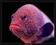 Fish | photographer: Владимир Мешков