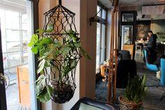 Mygreentown - Commonground Berlin, Greenterrior, Green Lifestyle, Garden Cafe