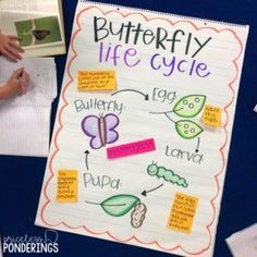 Here is a list of fun ideas about life cycles of plants and animals. I love using these life cycle activities for kids in my class! Science Anchor Charts, Kindergarten Anchor Charts, Kindergarten Science, Preschool Lessons, Life Of A Butterfly, Butterfly Project, Cycle For Kids, Life Science, Science Biology