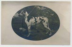 Ansichtskarte Dt. Reich 1926 mit Hund/ DOGGE, gelaufen (20920)