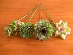 Collection of 24 wired succulents for Holly- 24 varied echeverias and succulents on wire stems