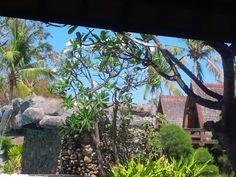 Graden hotel Vila Ombak. Gili Trawangan, Aquarium, Plants, Travel, Goldfish Bowl, Viajes, Aquarium Fish Tank, Destinations, Plant