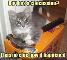 funny cat pictures with captions 9 | funny cats