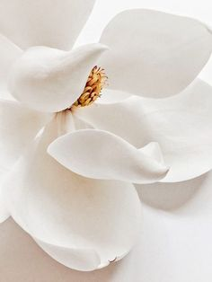 39 trendy flowers photography close up pictures Flower Aesthetic, White Aesthetic, White Flowers, Beautiful Flowers, Flowers Nature, Motif Art Deco, Photocollage, Magnolia Flower, Close Up Pictures
