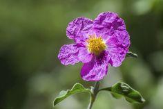 Little Purple Flower.