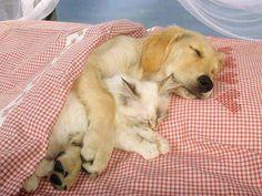 Good-night!