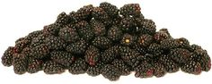 The Ollalieberry has the initial appearance of an elongated blackberry, its skin tone a glossy onyx with ruby highlights. Like its parent blackberry, it does not have a hollow center, rather its stem end is closed as it remains intact when picked. The Ollalieberry is balanced in flavor, both sweet and perfectly tart, tender and juicy. As it is with most berries, its coloring will stain upon touching. The Ollalieberry's fragility when ripe make for a shortened shelf-life.
