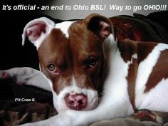 Way to go Ohio!! No more BSL! Now I hope other states listen    What an amazing outcome!  Fortunately, they educated themselves and learned about the breed - how loving, compassioate, loyal and gentle our Pit Bulls are; that it's not the breed but cruel humans who torture them that causes problems.  Today, my heart is happy for Ohio.  It will be even happier when the nation realizes it's NOT the breed - but the cruel owners.~~~WAY TO GO, OHIO!!!~~~~