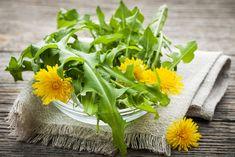 Dandelion Salad, Dandelion Leaves, Dandelions, Dandelion Coffee, Natural Diuretic, Taraxacum Officinale, Natural Remedies For Arthritis, Chicory Root, Natural News