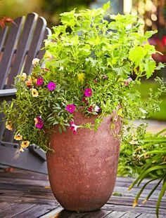 A container garden that lasts all season and delivers vibrant color. For 3 long-lasting container garden ideas: http://www.midwestliving.com/garden/container/container-gardens-that-last-all-season/