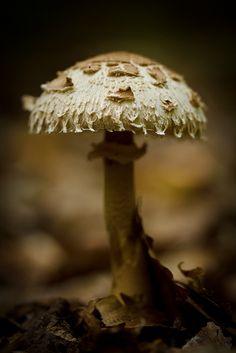 shroomerton by shane holsclaw, via Flickr