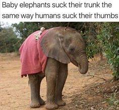 13 Hilarious Elephant Memes