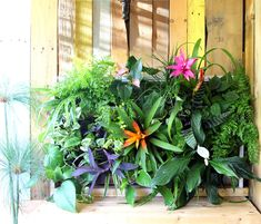DIY Tropical Living Wall out of an old Pallet #diy  #dan330 http://livedan330.com/2015/06/11/diy-tropical-living-wall-out-of-pallets/