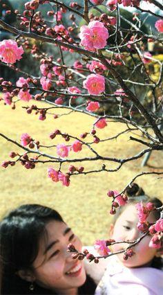 [사진] 내일 입춘 … 부산엔 홍매화 활짝  - 중앙일보 뉴스