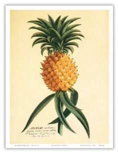 Hookipa (Hospitality) Pineapple Drawing - Vintage Hawaiian Art Poster Print, 9