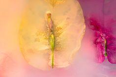 Immersed Memories - Diane Varner Photography