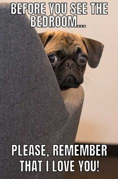 Funny Dog Meme with a worried looking pug.   #dogs #funny #meme #humor #barkinglaughs #pug Funny Dog Captions, Dog Quotes Funny, Funny Animal Jokes, Funny Animal Pictures, Cute Funny Animals, Animal Memes, Hilarious Pictures, Funny Puppies, Cute Funny Dogs