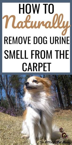 How to remove dog urine smell from the carpet - this solution works like a charm to remove pet odors from the carpet!