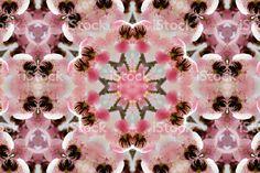 Manuka Flower (Leptospermum Scorparium) Aotearoa/ New Zealand Tea Tree Mandala Royalty- Free Stockphoto. More Images available in my Portfolio. Kiwiana, Commercial Art, Flower Mandala, Beauty Photos, Tea Tree, Image Now, Fine Art Photography, Printable Art, New Zealand