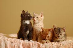 little kitten friends